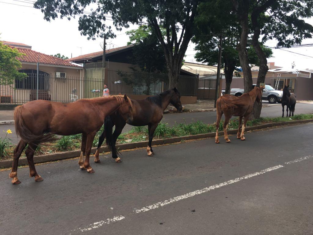 Moradores-reclamam-de-cavalos-soltos-no-Jardim-Apucarana-03
