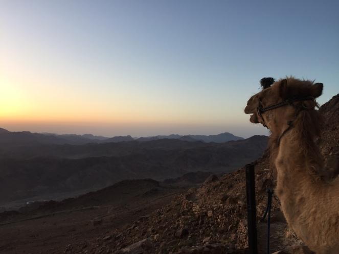 Egito - Monte Sinai (5)